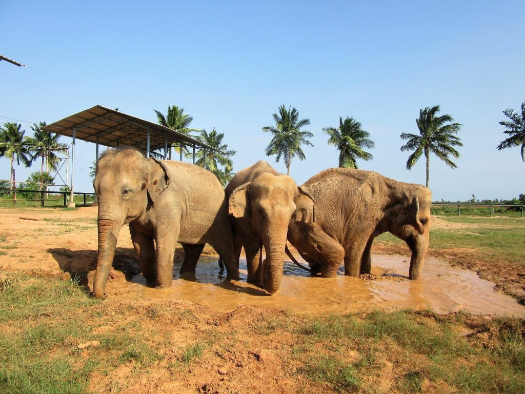 Elephants & Turtles Volunteer Tour